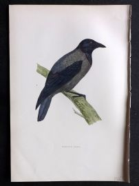 Morris 1897 Antique Hand Col Bird Print. Hooded Crow